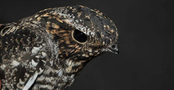 How we can keep birds from crashing into windows and dying